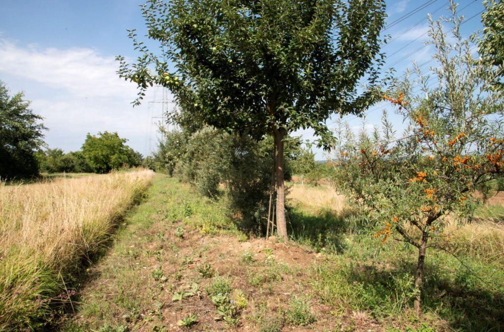 Agroforesterie, pisteà explorer pour le climat