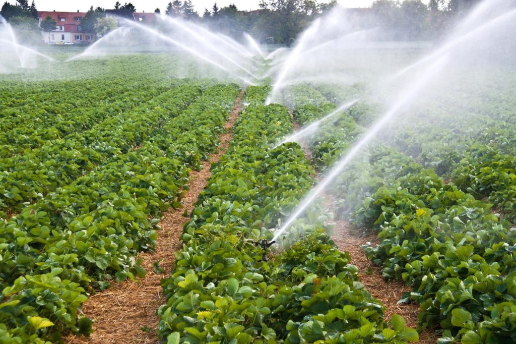 Irrigation des prairies et culture