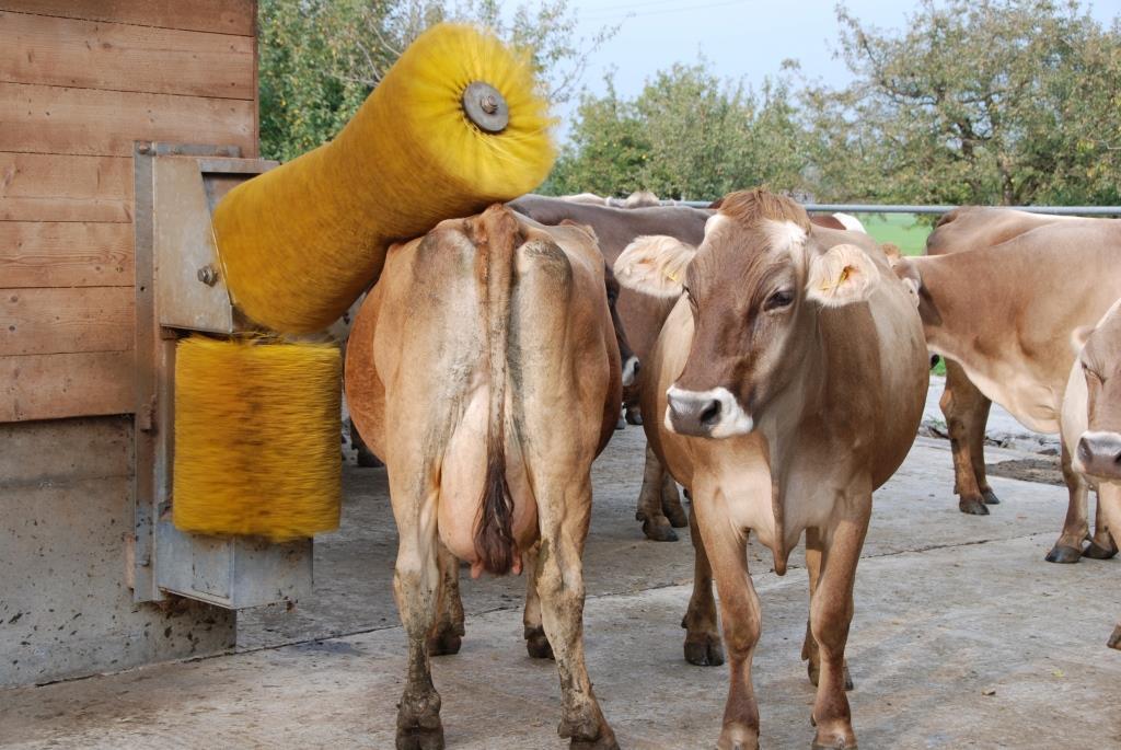 Le bien-être des animaux est très important pour les agriculteurs suisses.