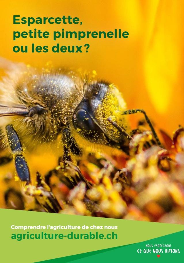 L'agriculture prend de nombreuses mesures pour protéger les abeilles, qui dépendent notamment de la biodiversité.