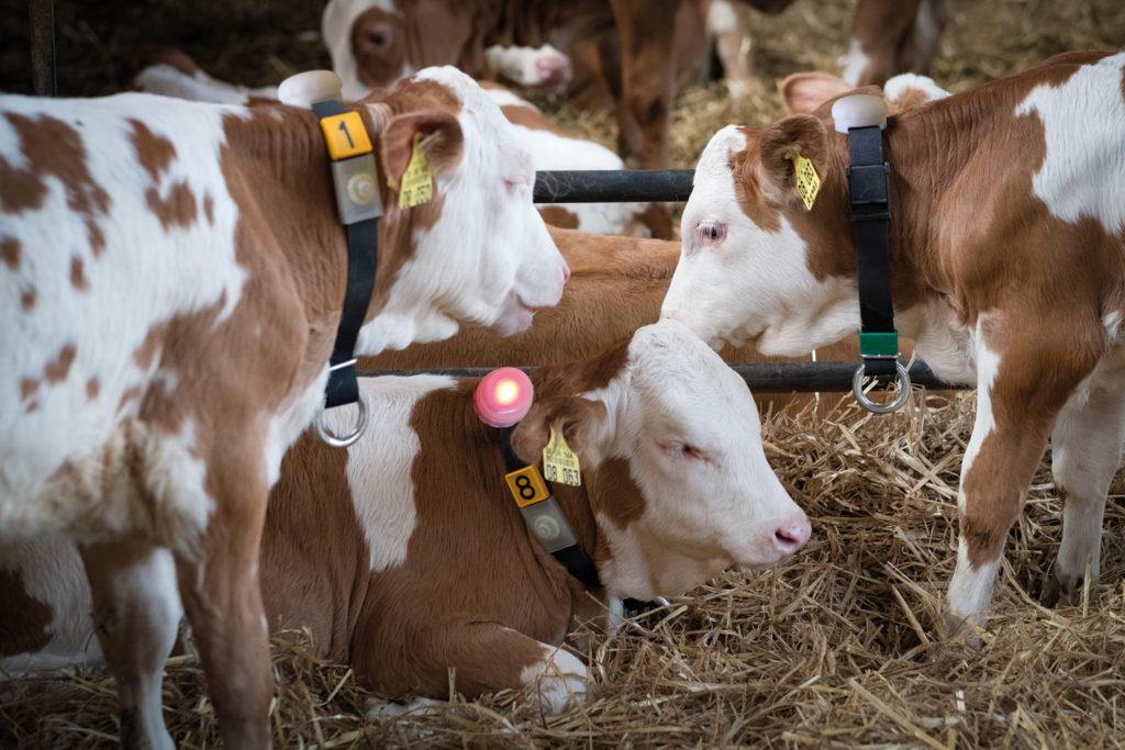 L'élevage suisse innove aussi avec de nouvelles technologies pour garantir la santé et le bien-être animal.
