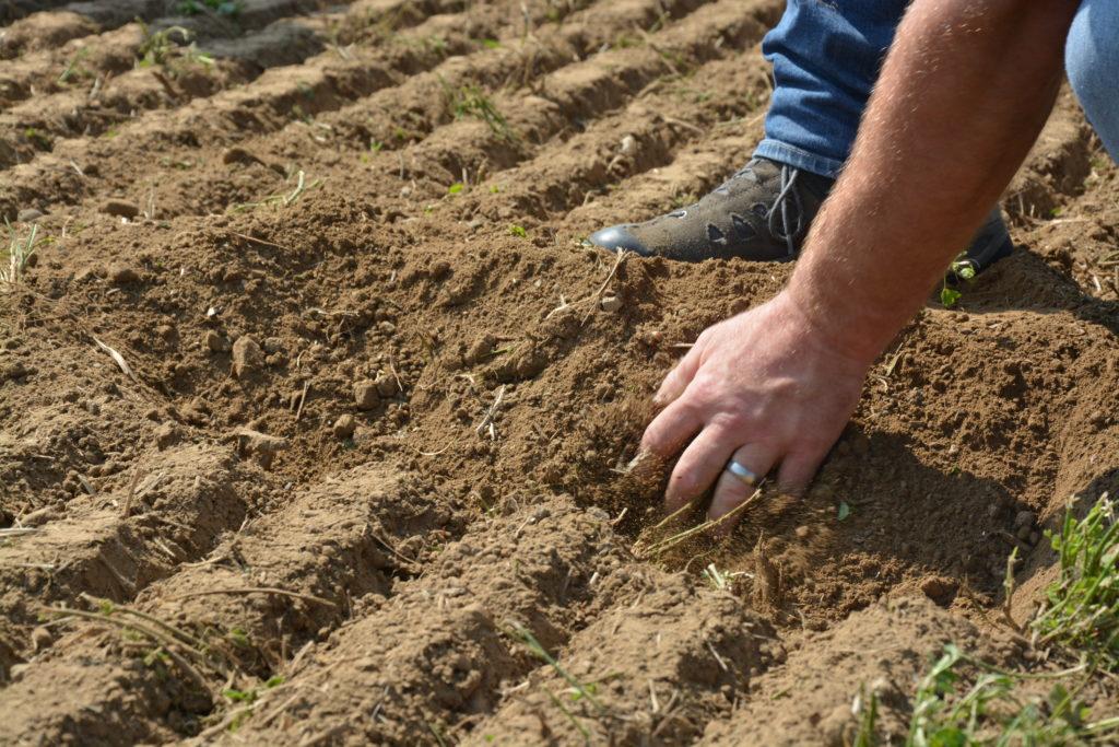 Le sol est support de vie: une ressource précieuse qui abrite deux tiers des organismes vivants et a de grandes qualités en regard du climat.