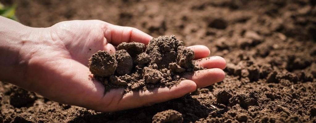 Le sol est une ressource précieuse qui abrite deux tiers des organismes vivants et a de grandes qualités en regard du climat.