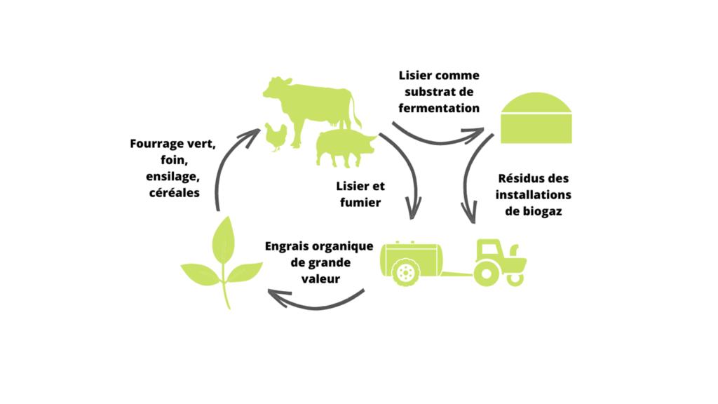 Les exploitations cherchent à atteindre un cycle des nutriments aussi fermé que possible.