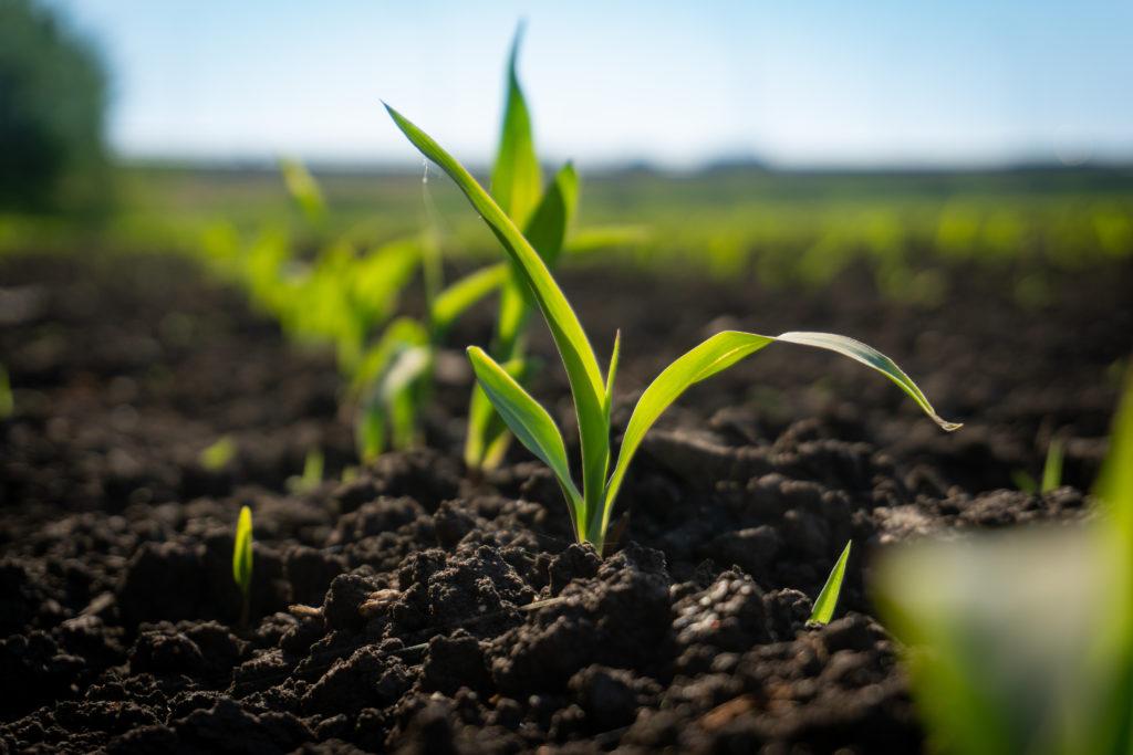 Les plantes ont besoin d'éléments nutritifs pour leur croissance.
